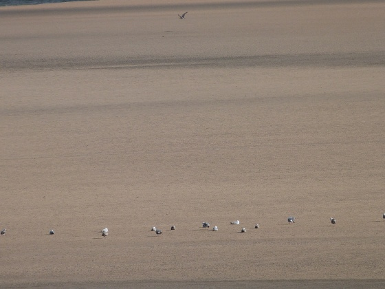 Birds on the Camel Estuary Padstow